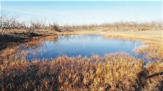 15068 County Road 341, Abilene, TX 79601 (MLS #14500911) :: The Heyl Group at Keller Williams