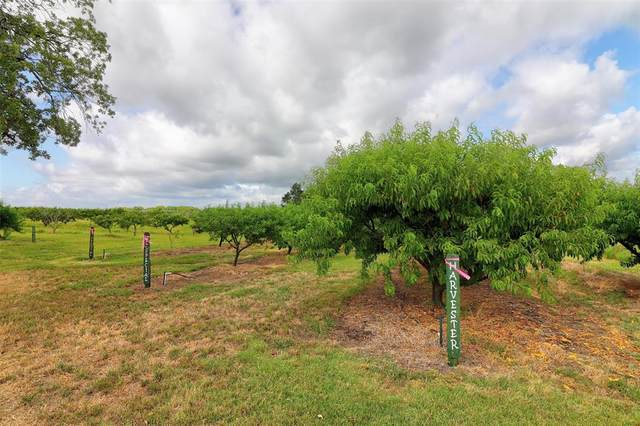 433 Hcr 1306, Whitney, TX 76692 (MLS #14512262) :: Robbins Real Estate Group