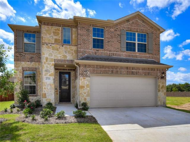 2731 Amistad Drive, Irving, TX 75062 (MLS #14072244) :: RE/MAX Town & Country