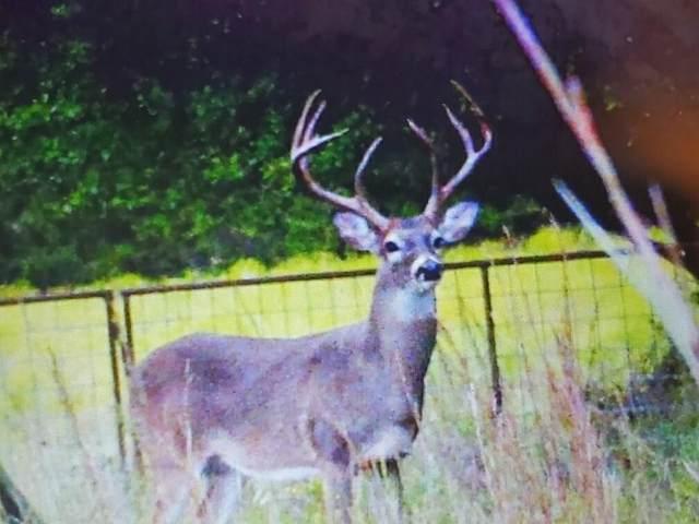 82 Cr 132, Mullin, TX 76864 (MLS #14238435) :: North Texas Team | RE/MAX Lifestyle Property