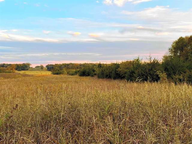 TBD Bethel Cannon Road, Whitewright, TX 75491 (MLS #14465065) :: The Hornburg Real Estate Group