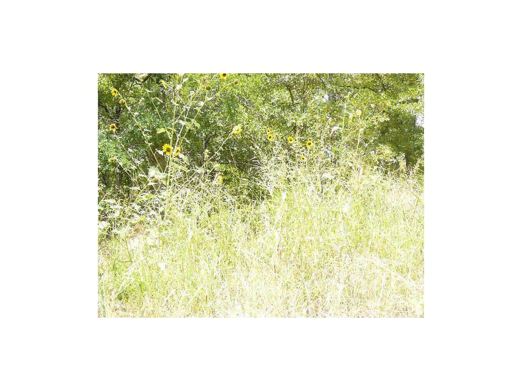 000 Woodland Way - Photo 1