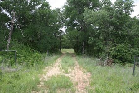 1191 Prickly Pear Trail, Gordon, TX 76453 (MLS #13465579) :: The Heyl Group at Keller Williams