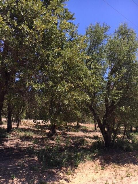 155 W Oak Tree Drive E, Poolville, TX 76487 (MLS #13878843) :: RE/MAX Town & Country