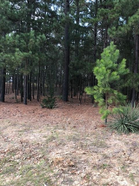 9130 Safari Shores Drive, Larue, TX 75770 (MLS #14020140) :: Real Estate By Design