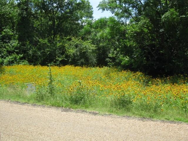00 Splitrail Drive, Mabank, TX 75143 (MLS #14111638) :: The Heyl Group at Keller Williams