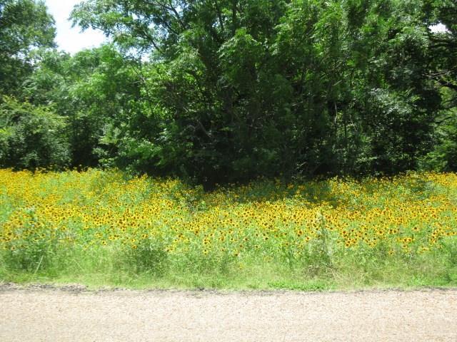 00000 Splitrail Drive, Mabank, TX 75143 (MLS #14111664) :: The Heyl Group at Keller Williams