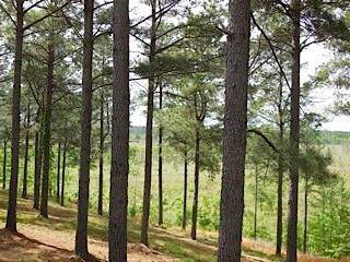 Lot 21B Candlefish Road, Broken Bow, OK 74728 (MLS #14155635) :: RE/MAX Town & Country