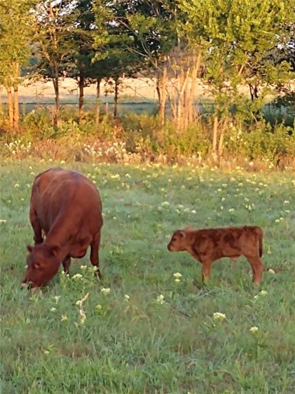 000 Farm Road 275, Cumby, TX 75433 (MLS #14165110) :: NewHomePrograms.com LLC