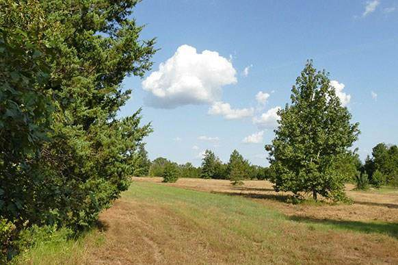 32.28 Ac Fm 312, Winnsboro, TX 75494 (MLS #14189487) :: HergGroup Dallas-Fort Worth