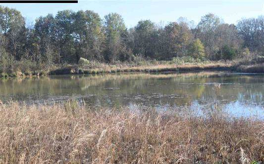 2779 Rs County Road 1490, Point, TX 75472 (MLS #14229602) :: Frankie Arthur Real Estate
