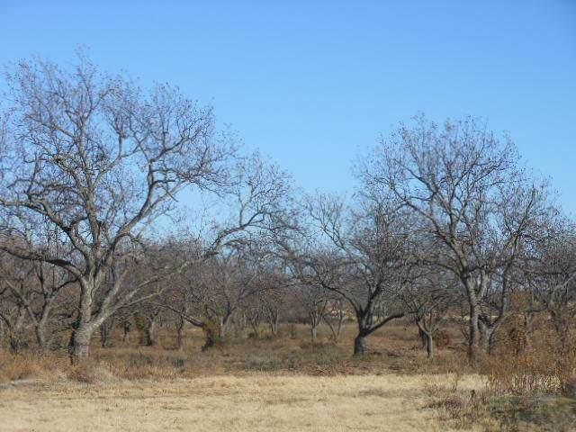 401 County Road 484, Ranger, TX 76470 (MLS #14235769) :: Lynn Wilson with Keller Williams DFW/Southlake
