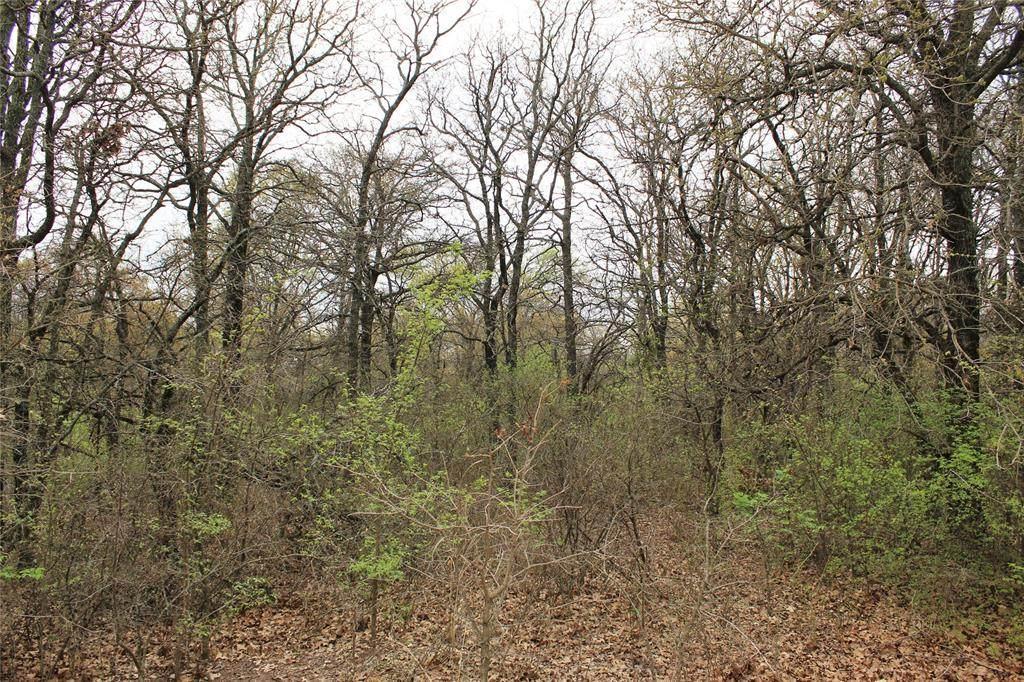 0 Timber Creek - Photo 1
