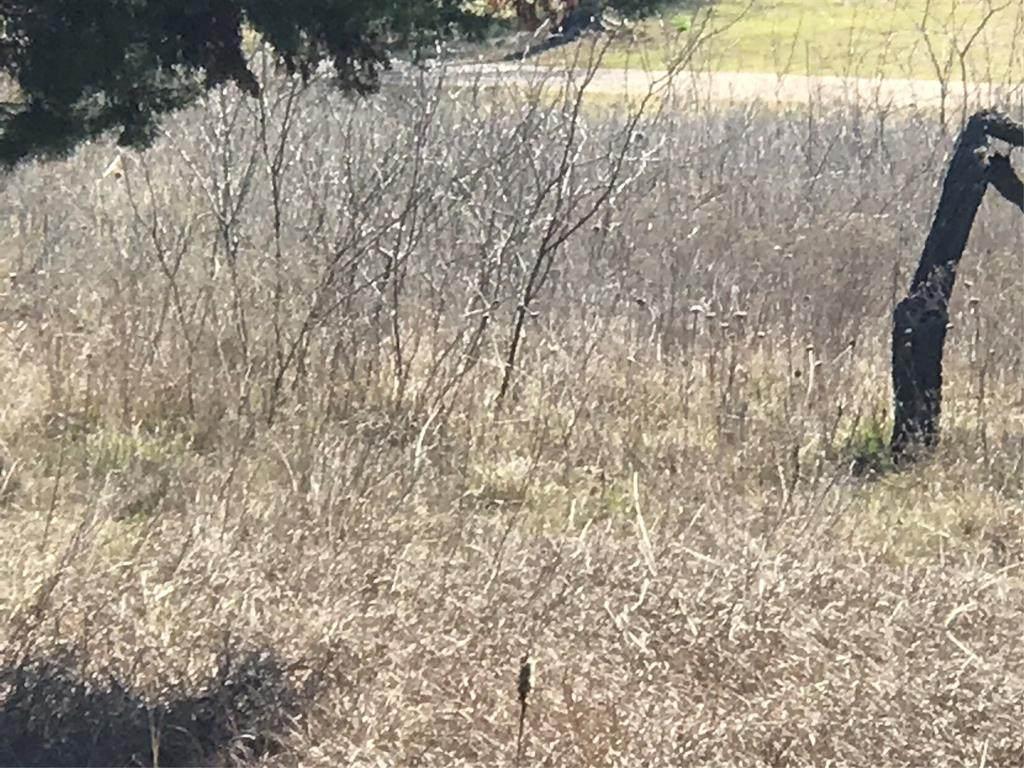 39302 Cedar Trail - Photo 1