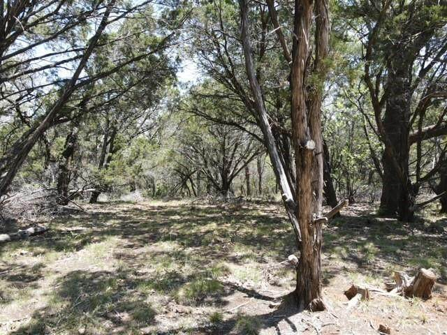 TBD Hwy 16, Strawn, TX 76475 (MLS #14576606) :: All Cities USA Realty