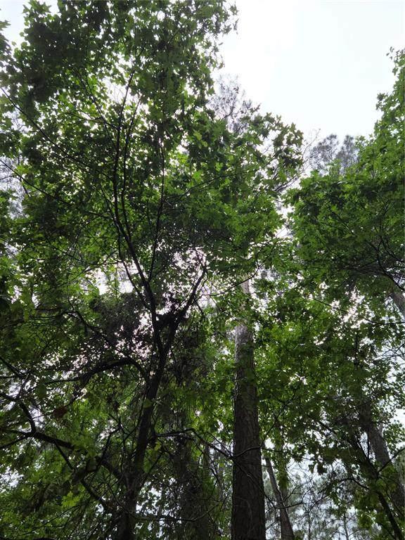 TBD Dogwood Trail, Mount Vernon, TX 75457 (MLS #14585184) :: Feller Realty