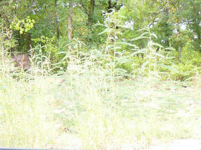 115 Lark Meadow Drive - Photo 1
