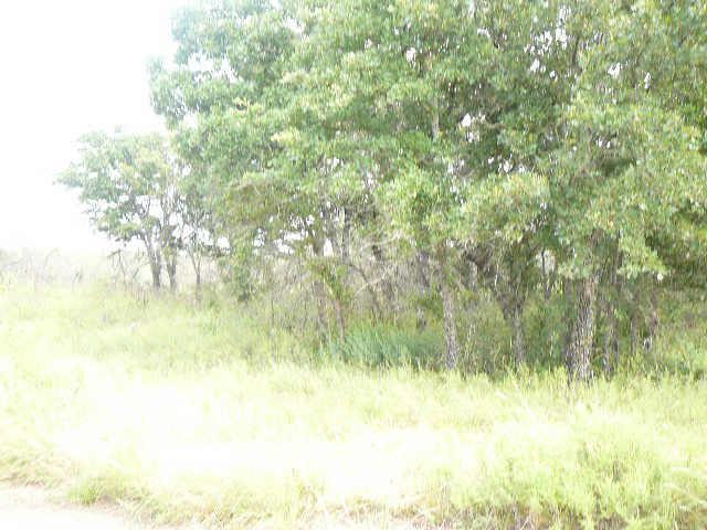 216 Shady Springs Dr, Runaway Bay, TX 76426 (MLS #10676534) :: Ann Carr Real Estate