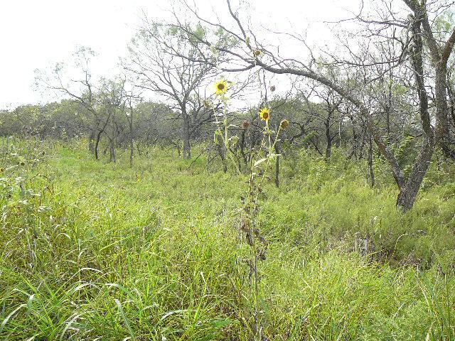 117 Bridlewood Lane, Runaway Bay, TX 76426 (MLS #10676951) :: Ann Carr Real Estate