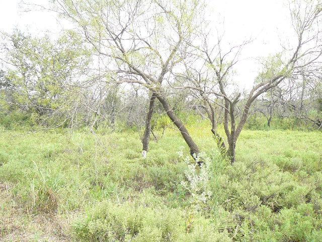 325 Lark Meadow Drive - Photo 1