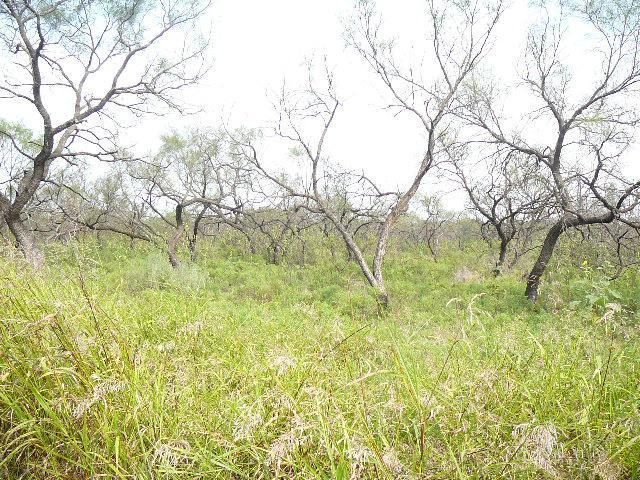 321 Meadow Lark Drive, Runaway Bay, TX 76426 (MLS #10677028) :: The Mitchell Group