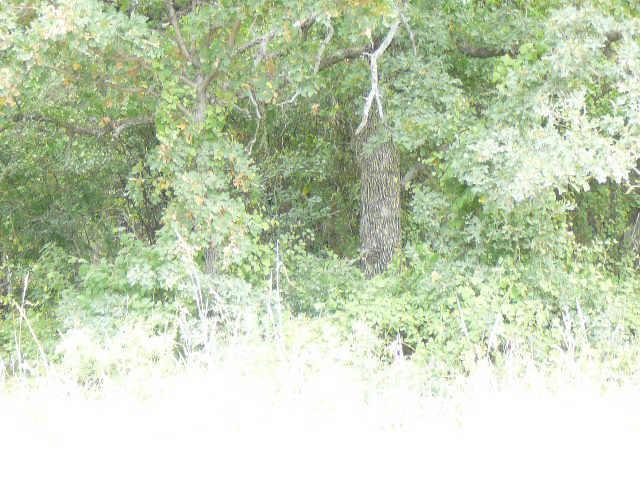 812 Shady Oaks Drive - Photo 1