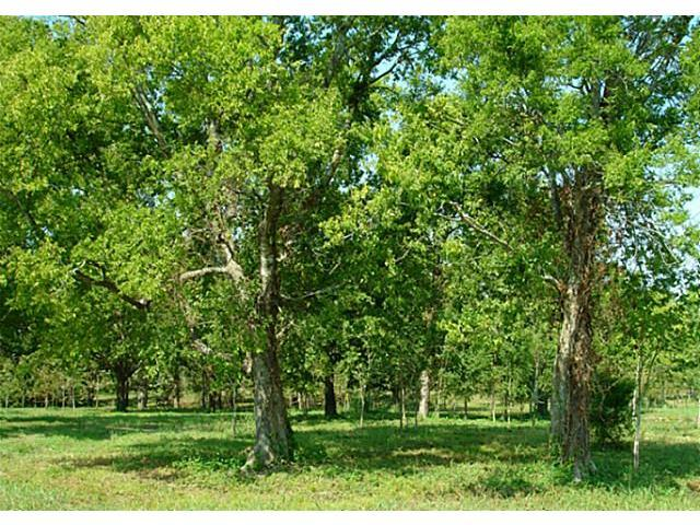 Lot 16 Pacifico, Kerens, TX 75144 (MLS #12118740) :: The Mitchell Group