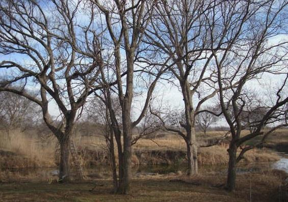 0 Private Road 326, Bynum, TX 76631 (MLS #13090653) :: Robbins Real Estate Group