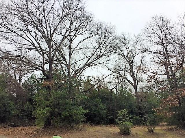 603-A Country Club Circle, Athens, TX 75751 (MLS #14005429) :: The Hornburg Real Estate Group