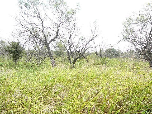 313 Lark Meadow Drive - Photo 1