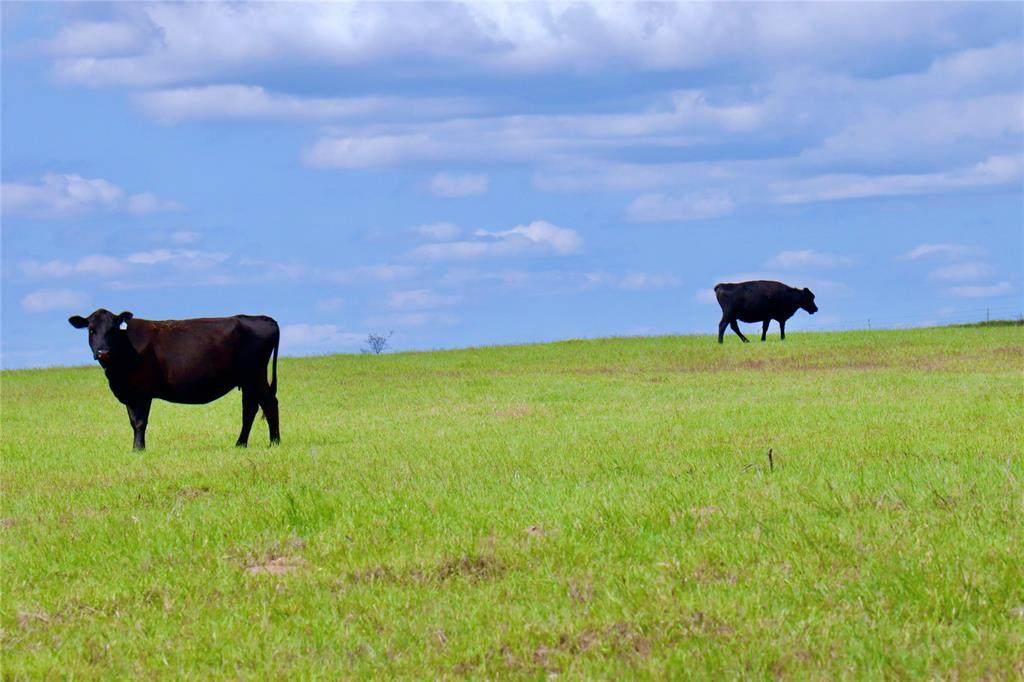 8895 Farm To Market 1749 - Photo 1