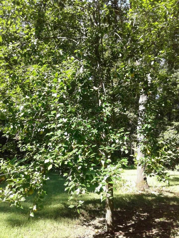 1741 Arkabutla Dam Road - Photo 1