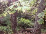 303 Woodland - Photo 1