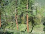 4 Ermine Lane - Photo 1
