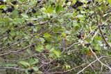 471 Pheasant Lane - Photo 9
