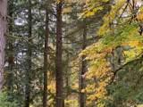 1390 Fireweed Road - Photo 13