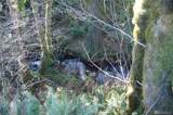 11105 Lewis River Rd - Photo 14