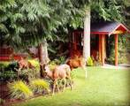 72 Fern Gully - Photo 36
