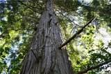3870 Holtzheimer Trail - Photo 14