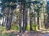 1570 Pinegrass Loop - Photo 5