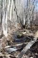 1 Stagecoach Trail - Photo 14