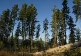300 Forest Ridge Drive - Photo 5