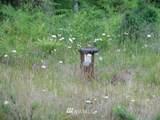 326 Black Hawk Loop - Photo 21