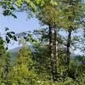 0 Wilderness Drive - Photo 12
