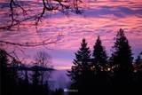 16525 Mount Forest Blvd - Photo 28