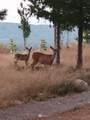 631 Whisper Creek Drive - Photo 11