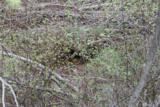 0 Newby Creek Rd - Photo 24