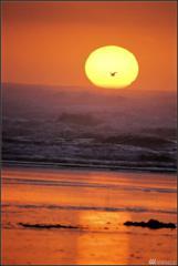 81 Chickamin Ave, Ocean Shores, WA 98569 (#1059283) :: Ben Kinney Real Estate Team