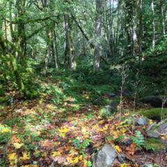 0-XXXXX Mt Tahoma Canyon Rd, Ashford, WA 98304 (#1063710) :: Ben Kinney Real Estate Team