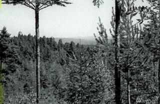 0-Lot 4 Lake Cushman Forest Reserve, Hoodsport, WA 98548 (#1065227) :: Ben Kinney Real Estate Team